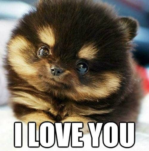Funny Love Memes For Her 179