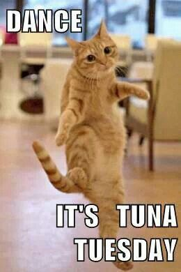 Dance Its Tuna Tuesday