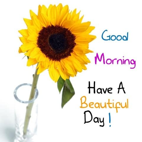 Have A Good Day Ahead
