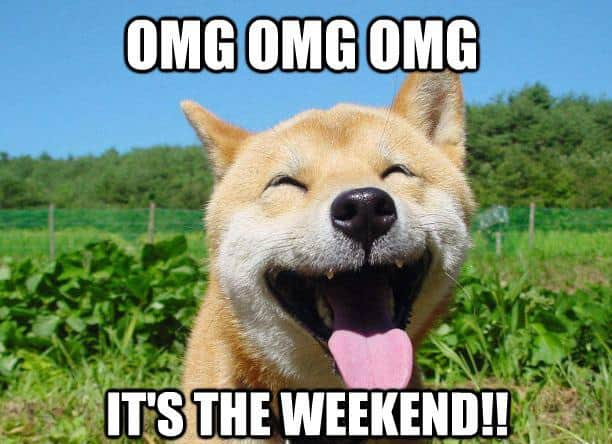 Omg Its The Weekend Dog Meme